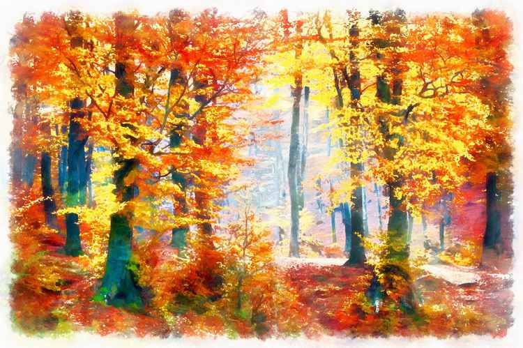 Colours of Autumn -