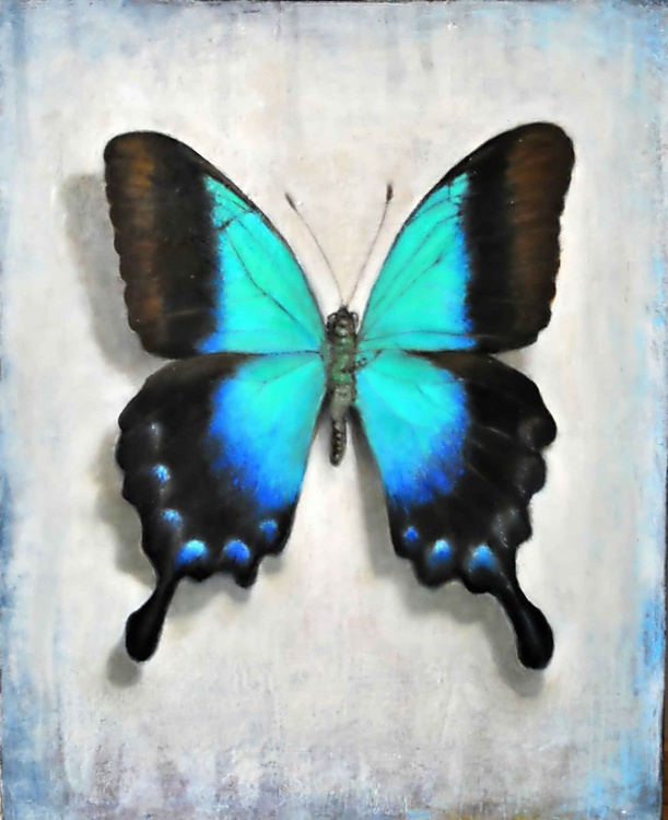Rare Glosswing Butterfly - Image 0