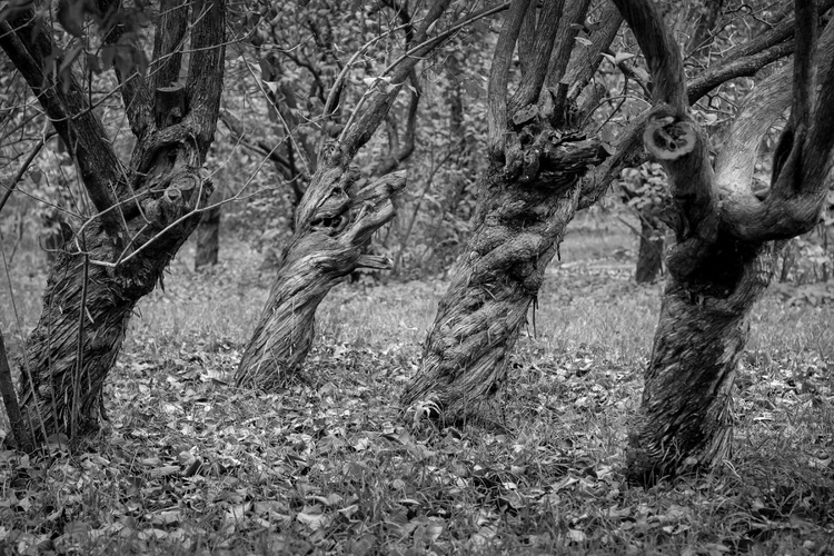 In the woodland - Image 0