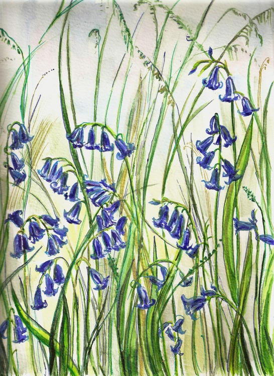 Devon Bluebells - Image 0