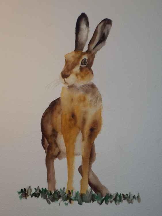 Alert Hare -
