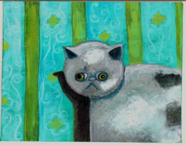 Grey Persian Exotic Short hair portrait spotted -
