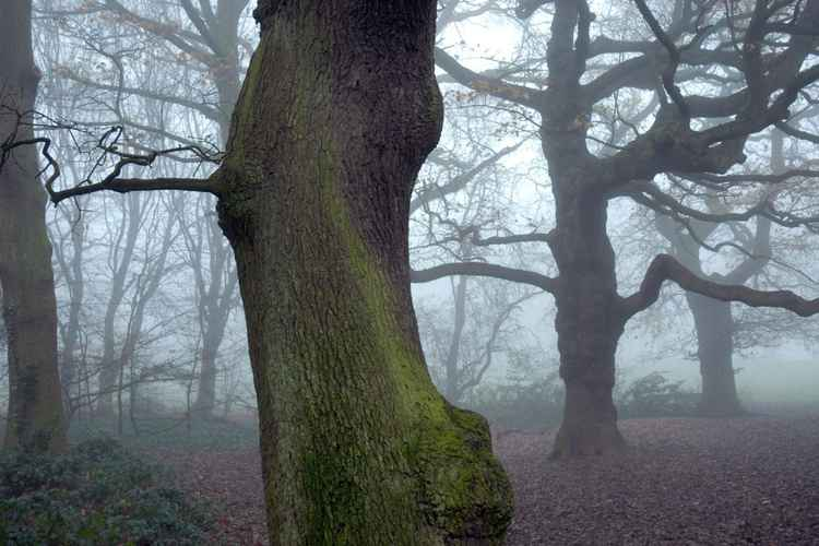 Foggy Day on Hampstead Heath London -