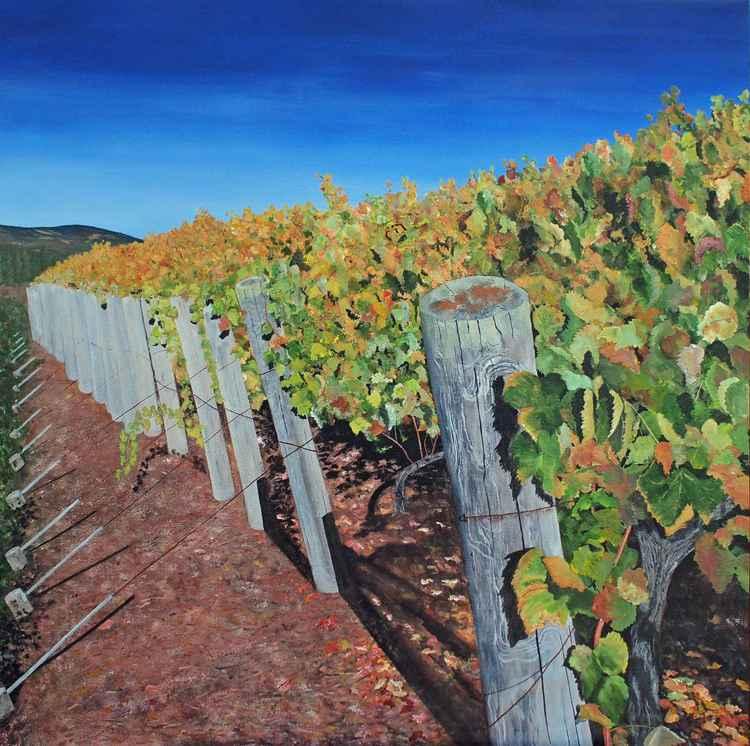 Sonoma Vineyard 2
