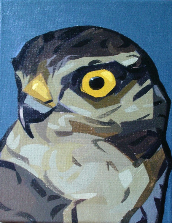 Hawk Eye - Image 0