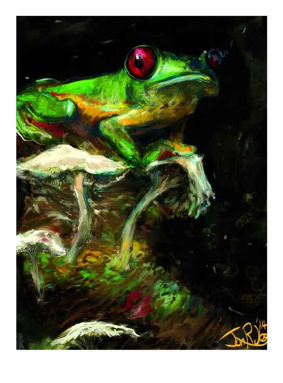 Gliding Treefrog -