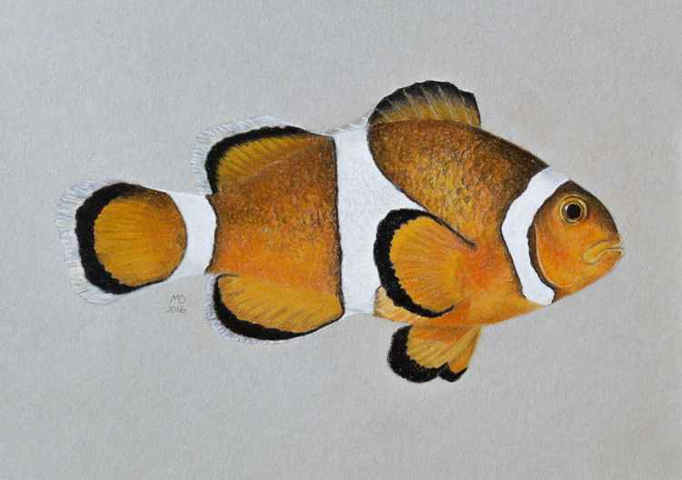"Original pastel drawing ""Clownfish"" -"