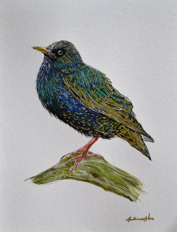 Starling - Image 0