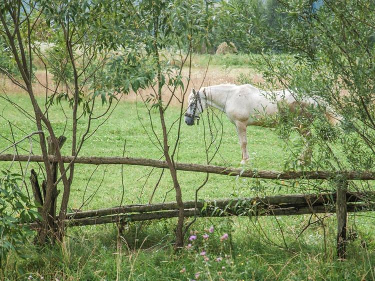The White Horse - Image 0
