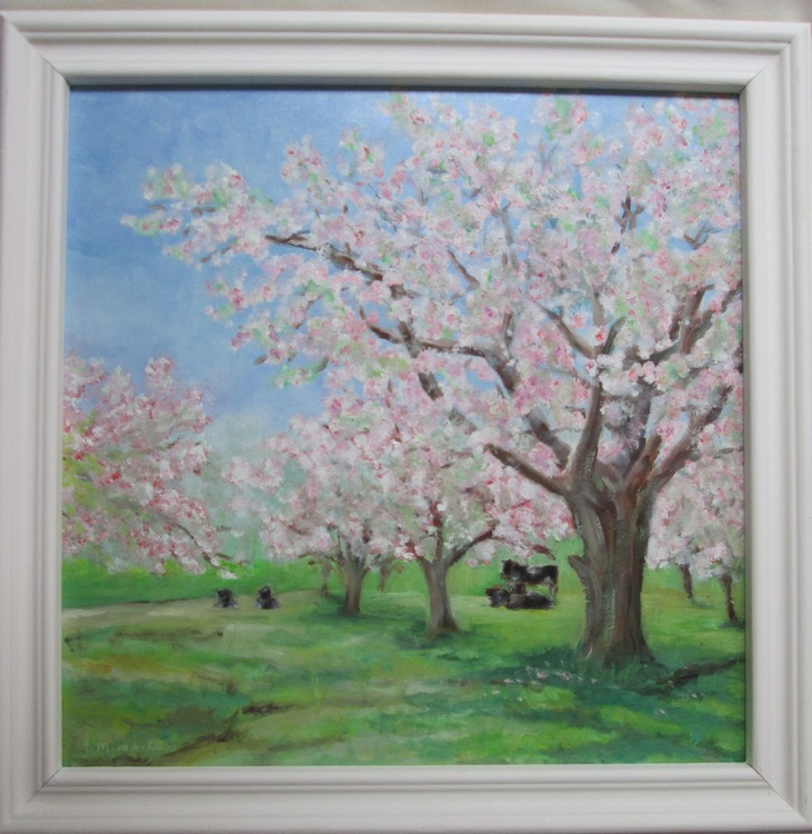 """OF COWS AND AN ORCHARD"",  landscape. trees, blossom, Oil, 30x30cm, framed - Image 0"