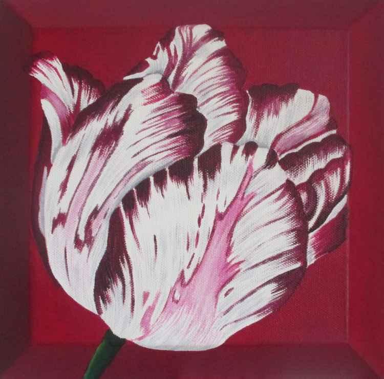 Burgandy Tulip 1 -