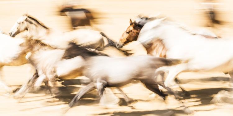 SPANISH HORSES 3. - Image 0