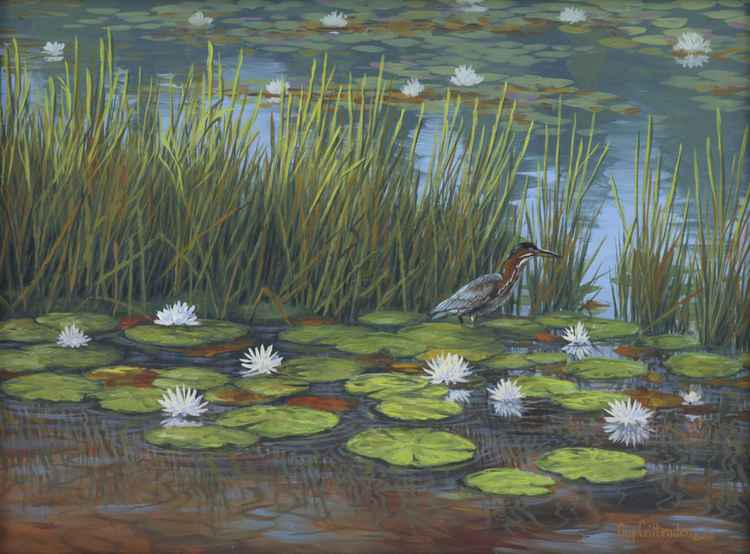 Green Heron and Lily Pads