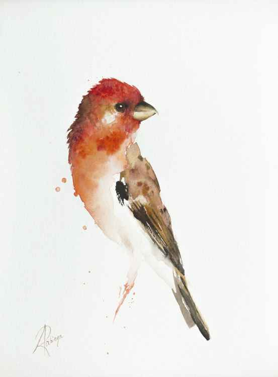 Common Rosefinch (Carpodacus erythrinus) -