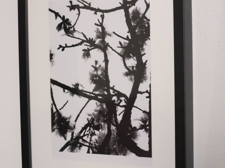 """Almond Blossoms"" framed photography by PASCVAL - Image 0"
