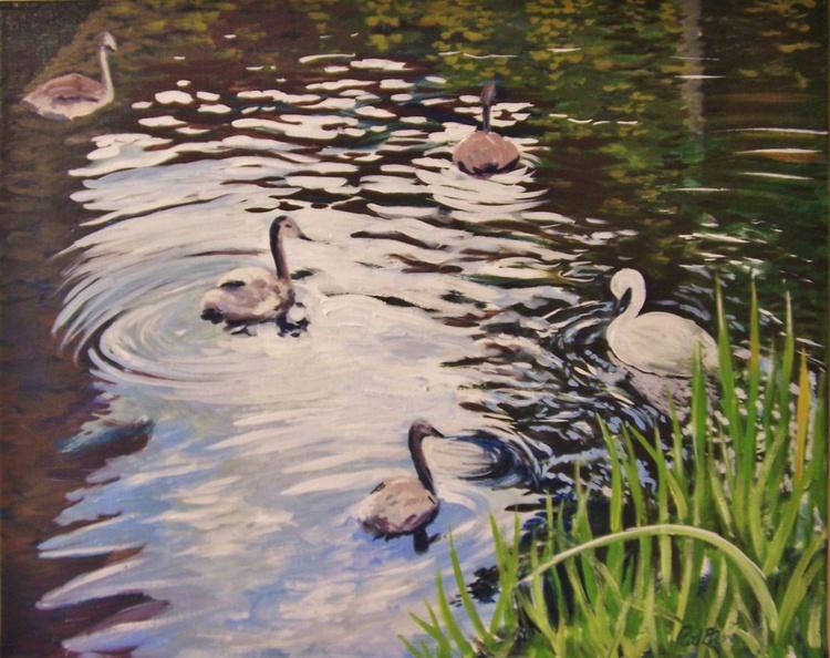 Reflections & swans at Kew Gardens - Image 0