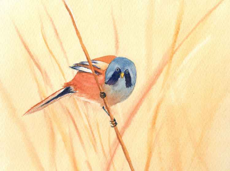 Bearded Tit -
