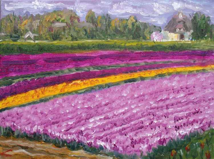 Tulip fields 2017 -