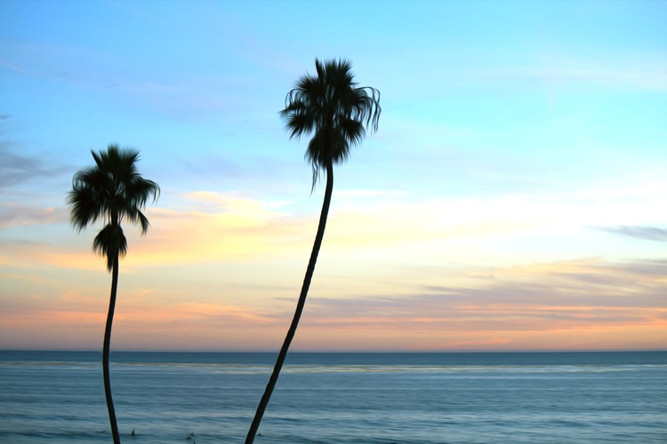 Lonely Palms - Image 0
