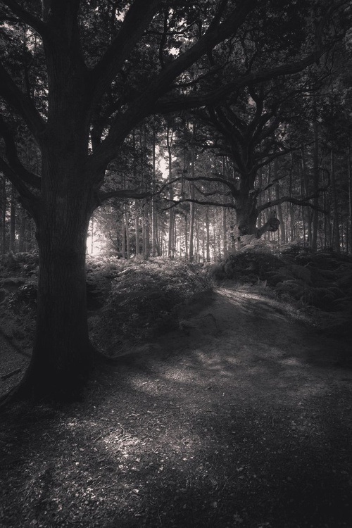 Light Beyond the Forest - Image 0