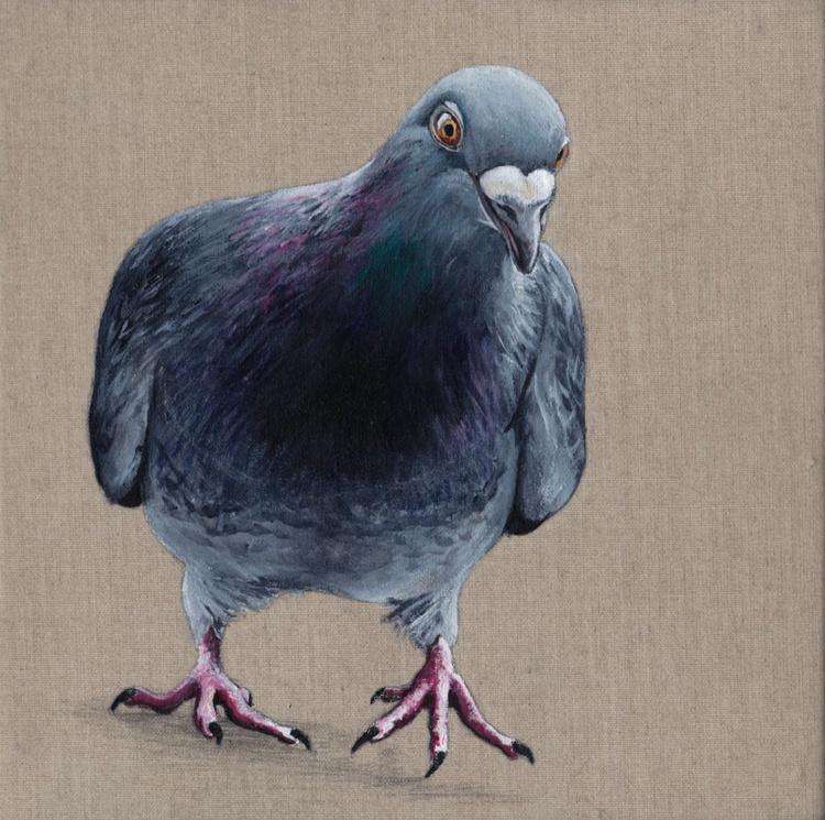Pigeon 0006 - Image 0