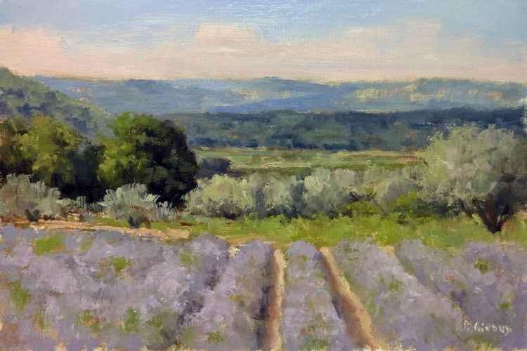 Lavender Field near Valensol