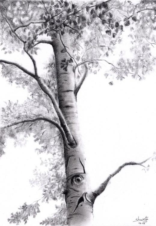 Ginkgo Tree - Image 0