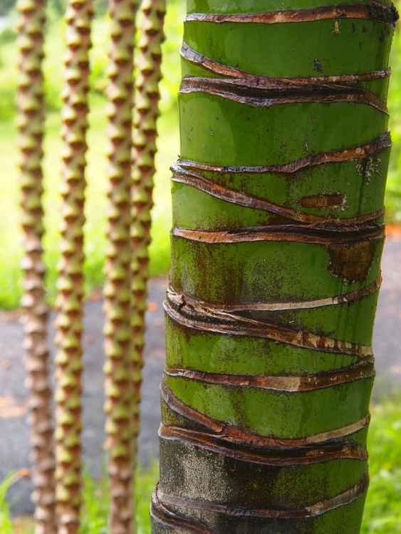 Palm curtain -