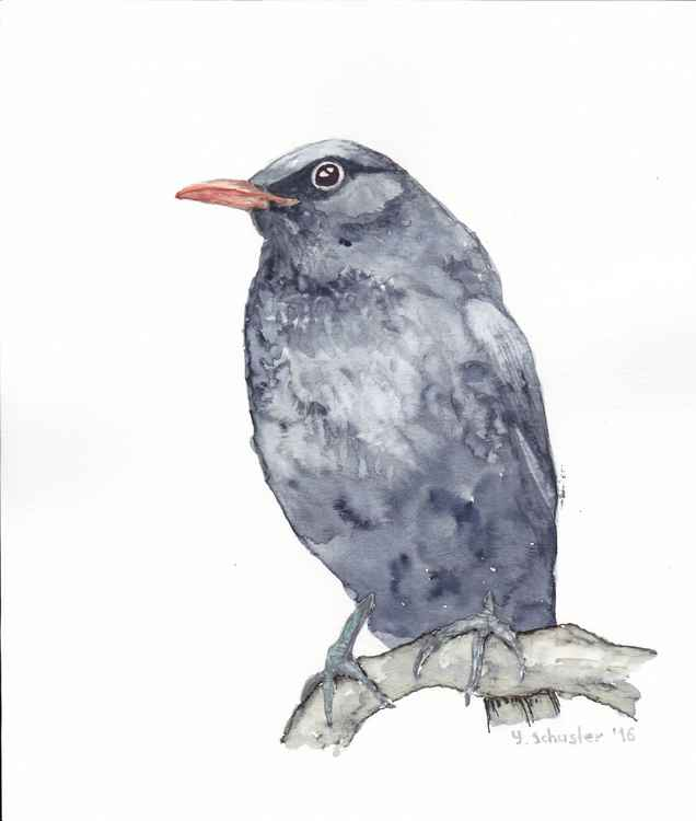 Watercolour birds portraits series. Blackbird -