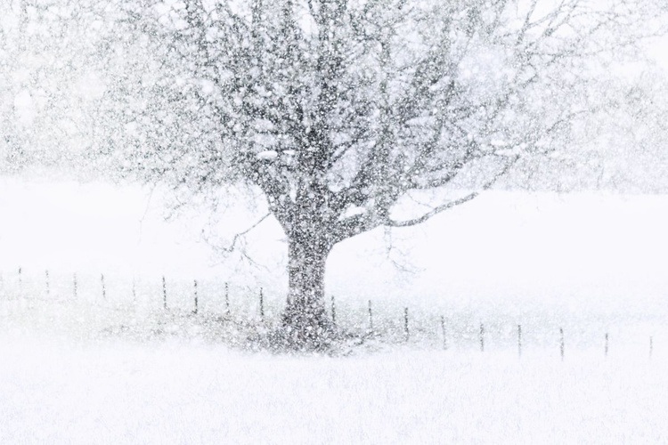 Snow Fall (Ltd Edition of only 20 Fine Art Giclee Prints from original artwork.) - Image 0