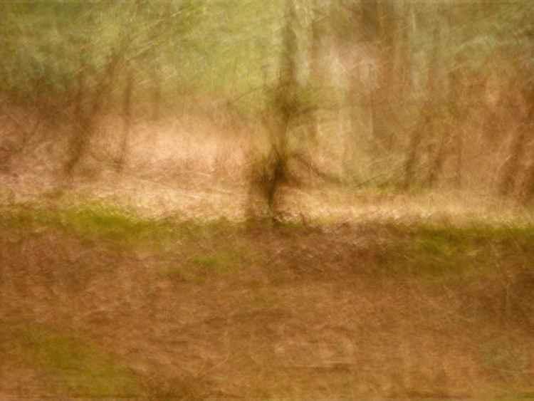 Histoire d'arbres.....