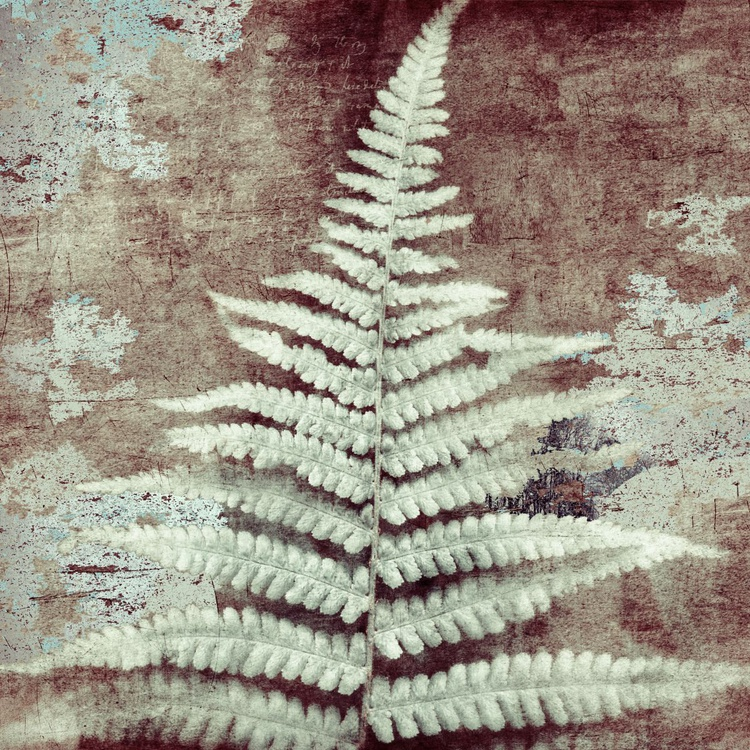 Ancient Fern closer to Cold - Image 0