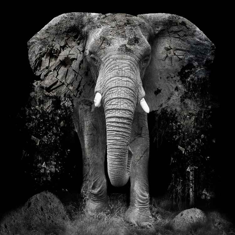 The Disappearance of the Elephant - Giclée Print