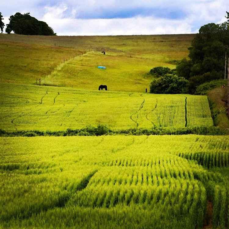 DOGLEG FARM -