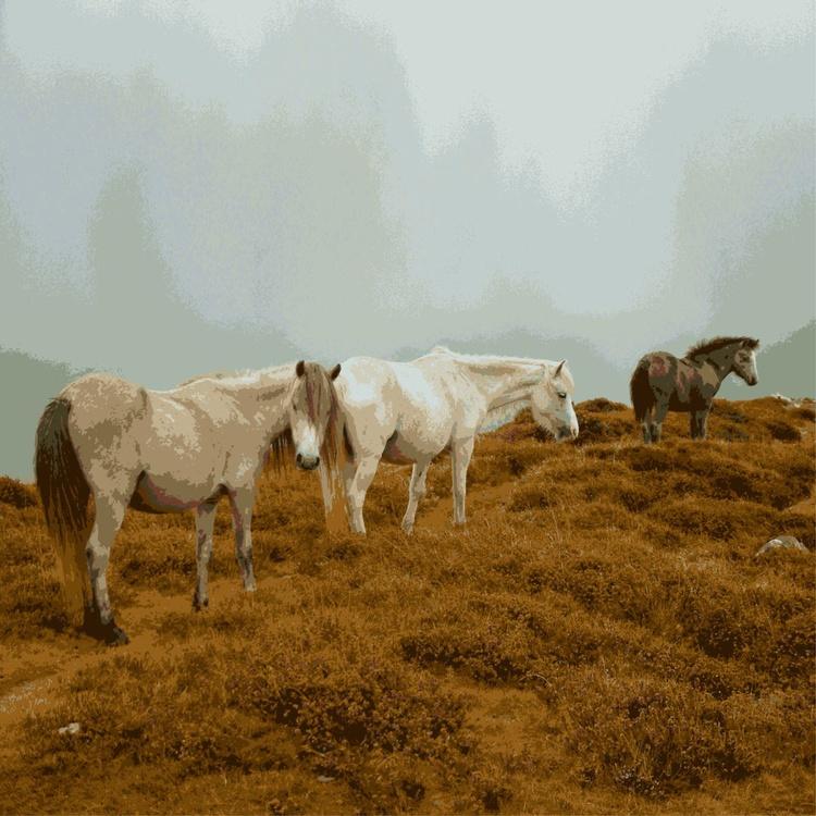 Mountain Ponies #1 - Image 0