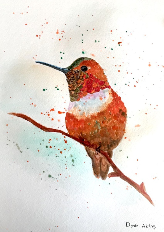 The Colorful Hummingbird - Image 0