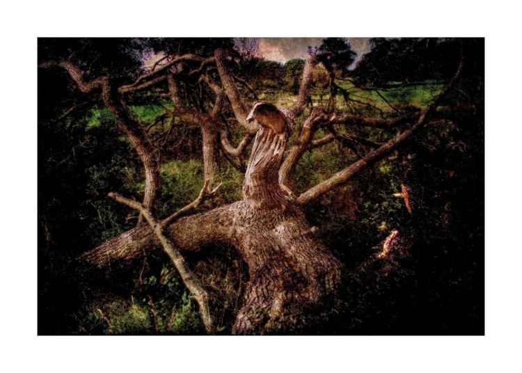 Fallen Tree -