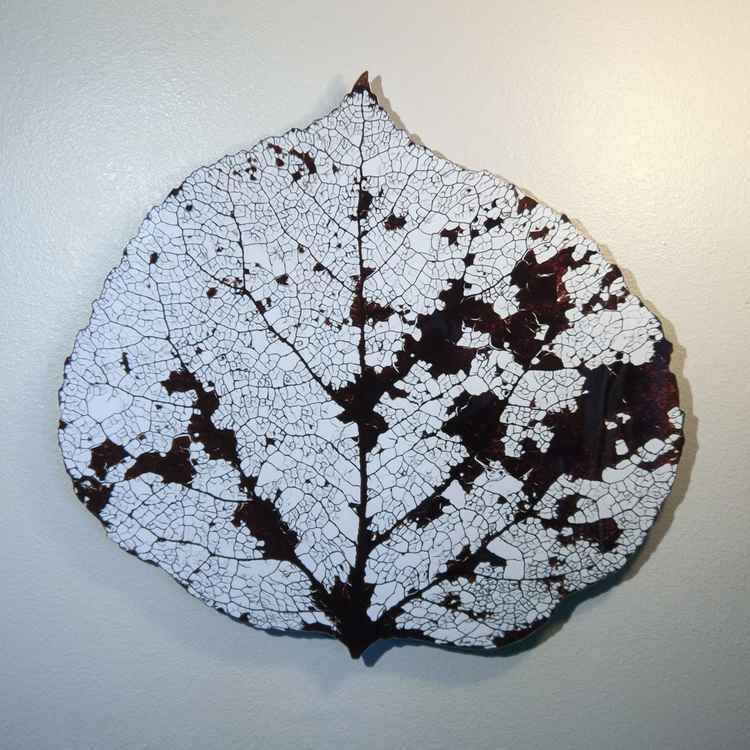 Medium Small Aspen Leaf Skeleton 2 -