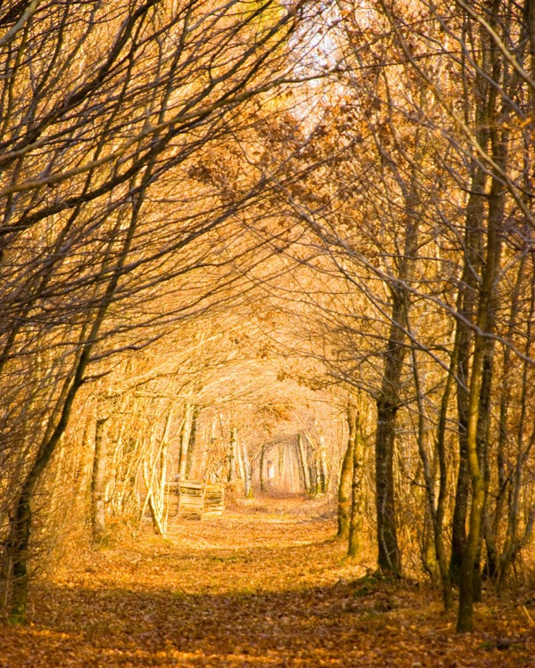 Forest Path - Image 0