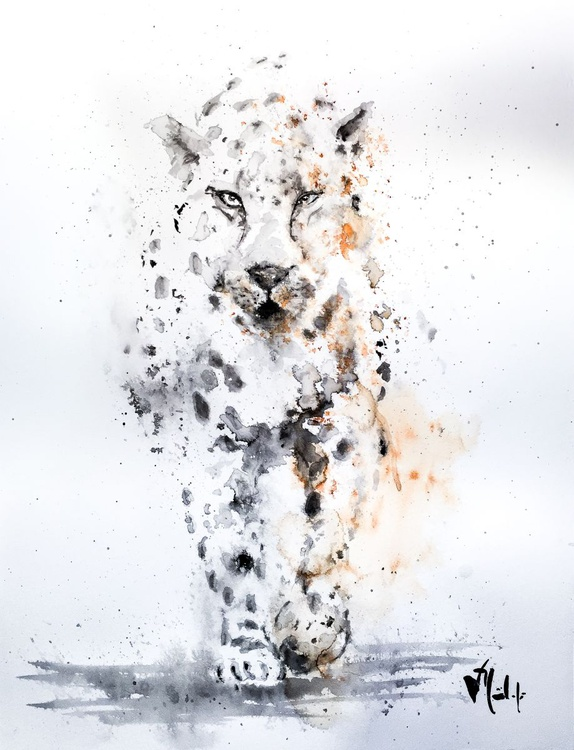 The snow leopard - Image 0