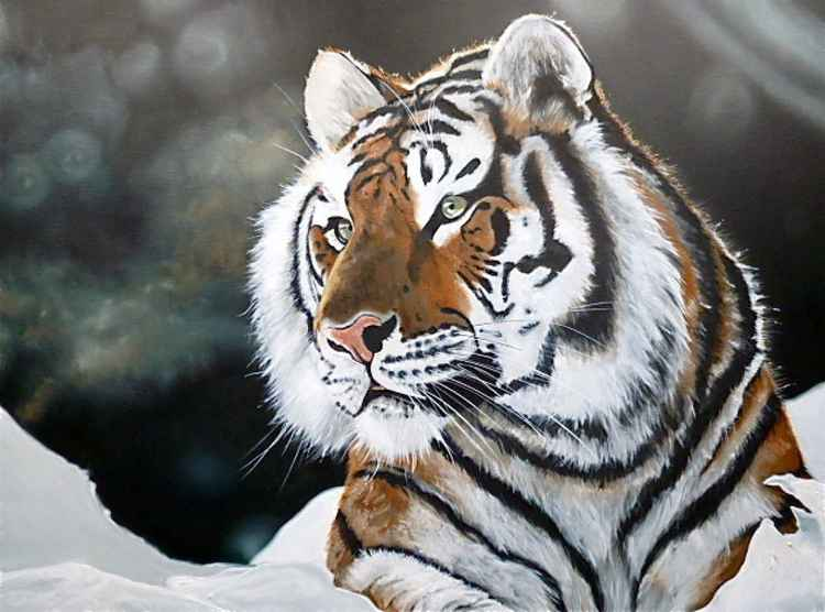 'Tiger in the Snow' -