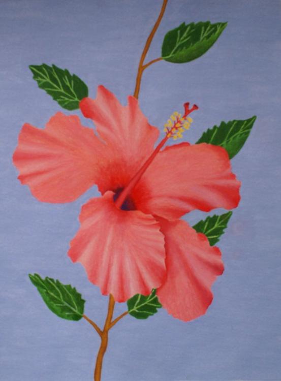 Beautiful Hibiscus - Image 0