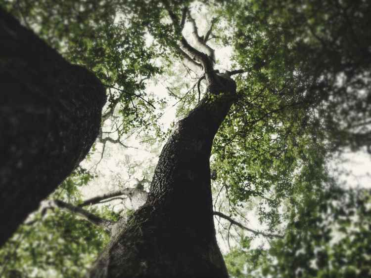 Treeview #3 -