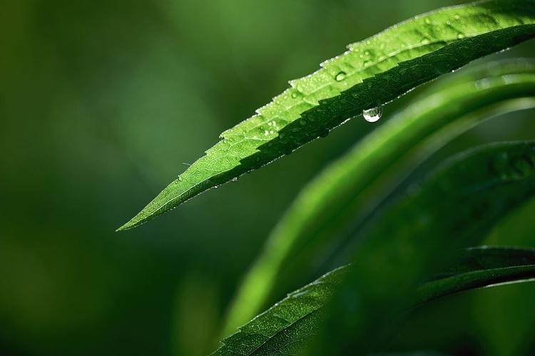 Green - Image 0