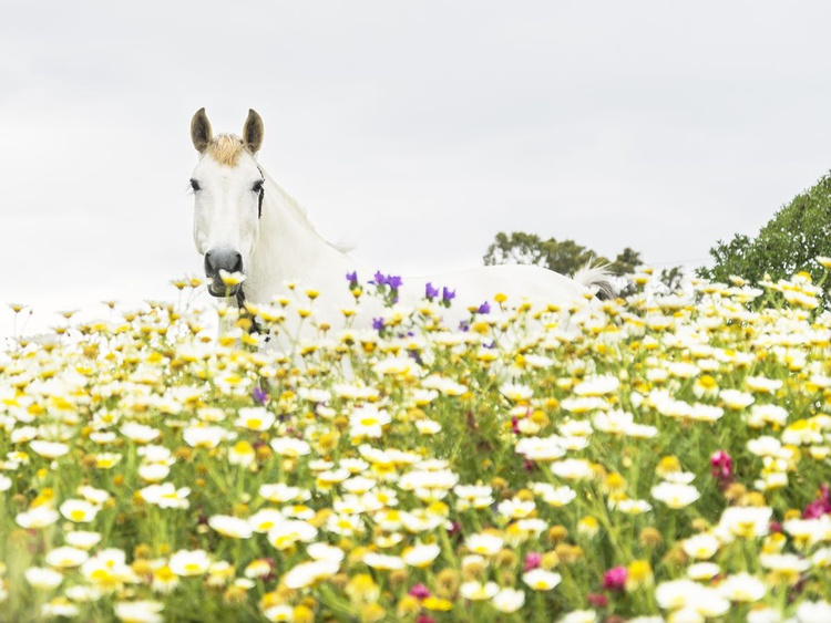 HORSE AND FLOWERS - Image 0