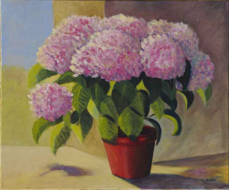 Hortensia au pot rouge -
