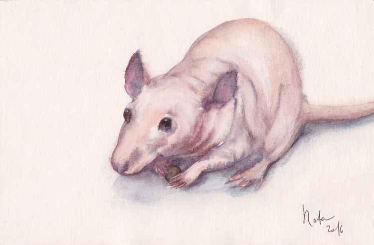 Rat Axel