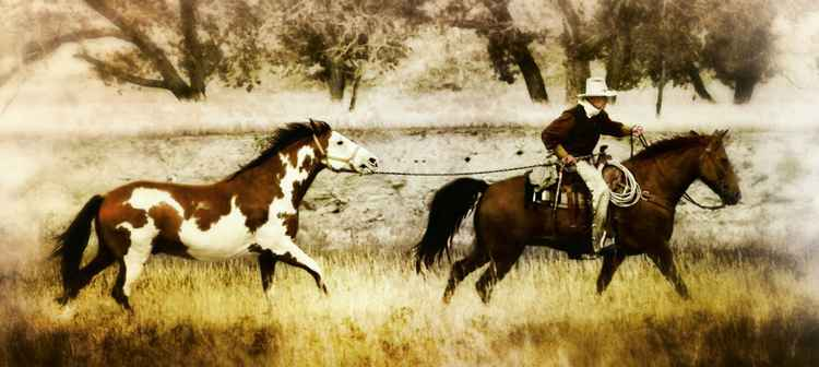 A Horse For Mary -