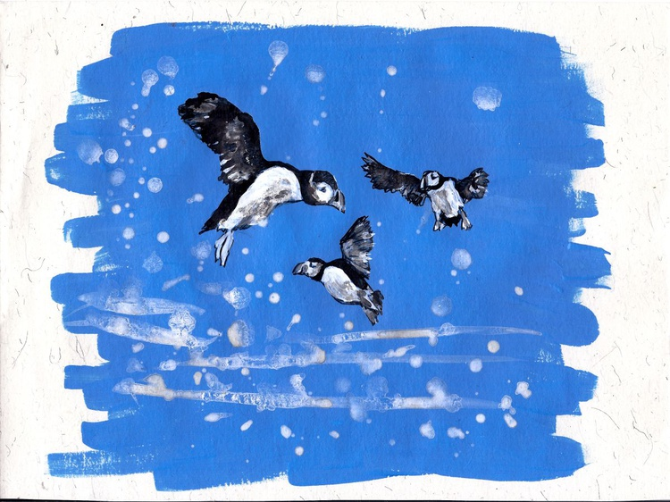 3 puffins drawing - Image 0