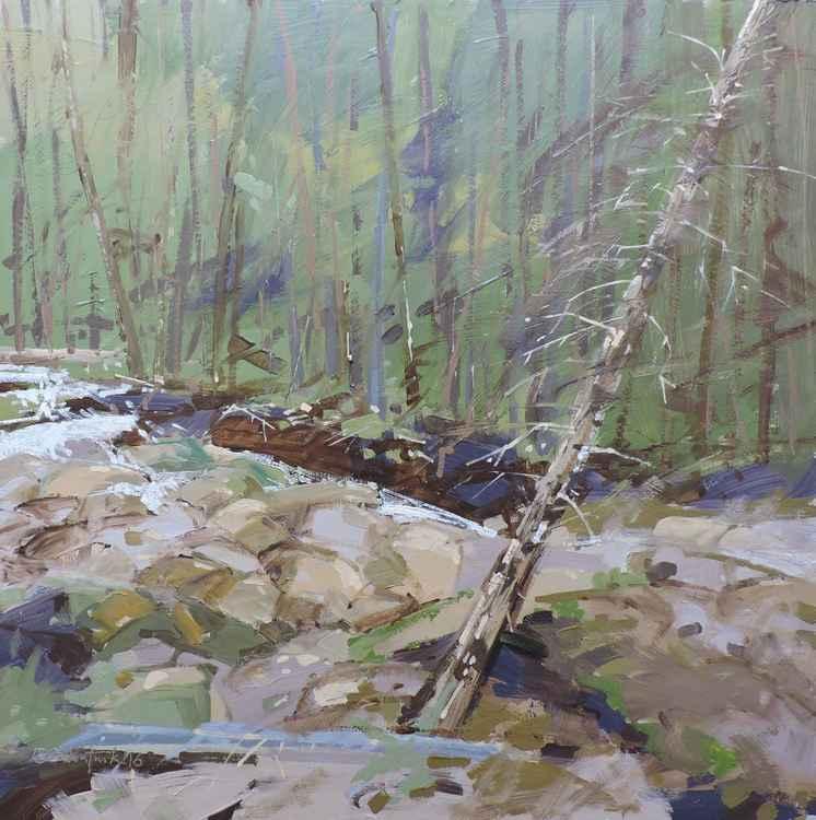 Jedediah Smith Wilderness -